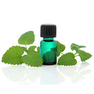 Melissa Oil (Officinalis)